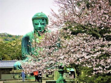 鎌倉に春がやってきました