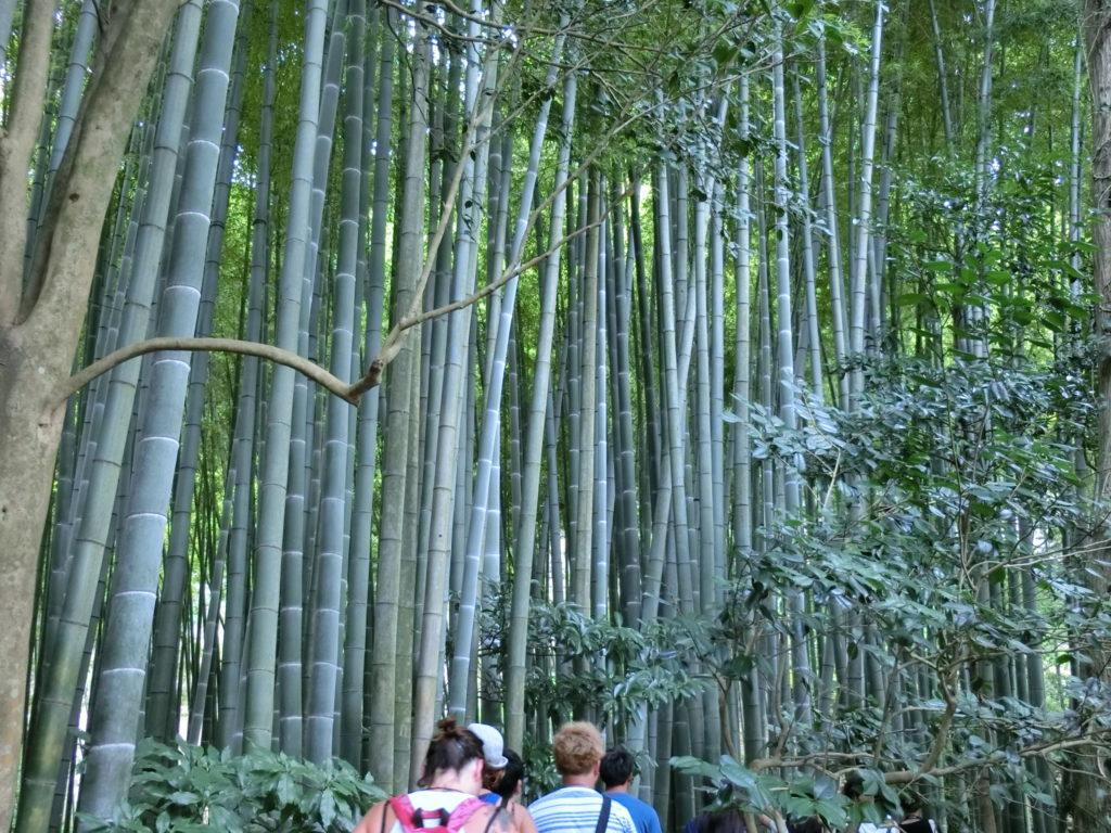 K-4 Kamakura Graceful Course